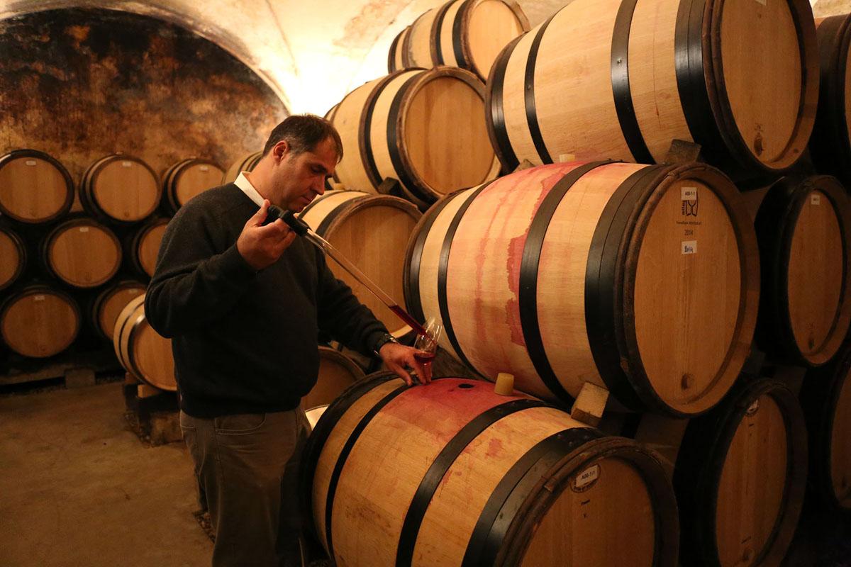 Bejot - vins & terroirs