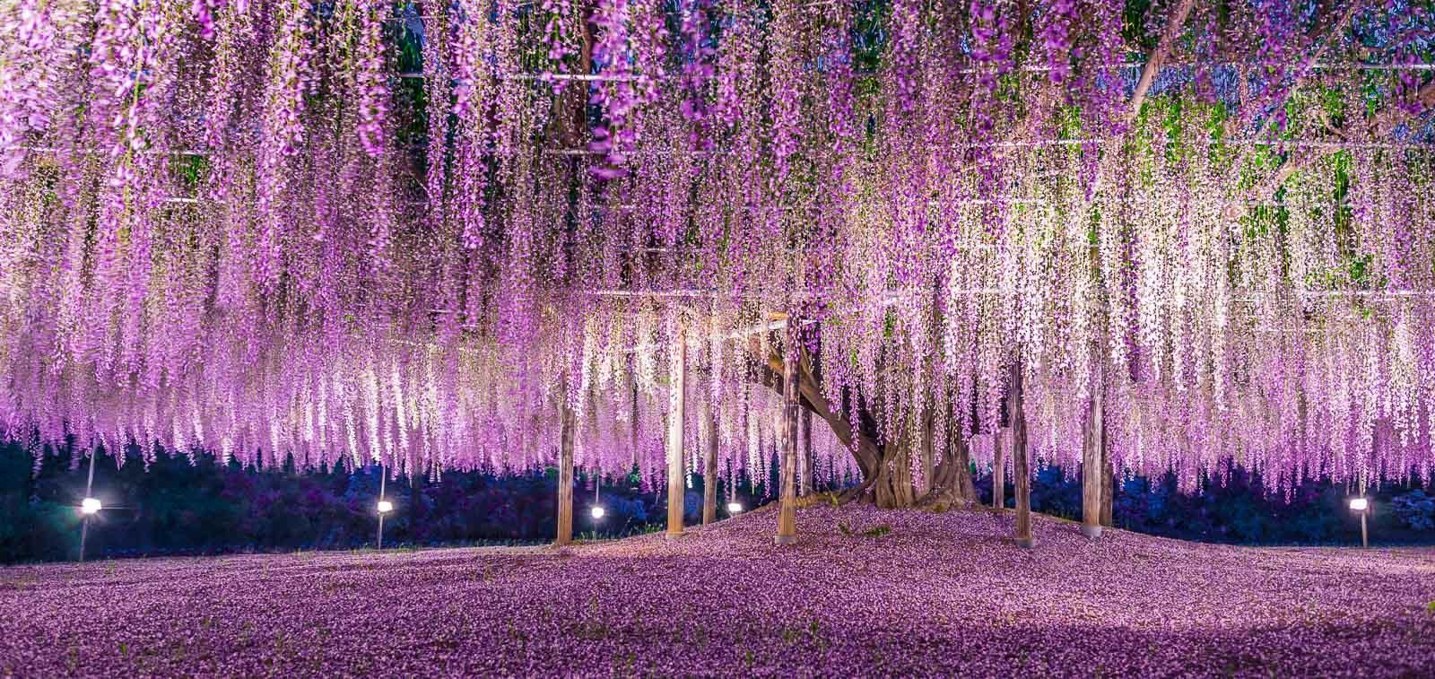 web 800p TOKYO LIGHT Dimitri Lamour-2-2